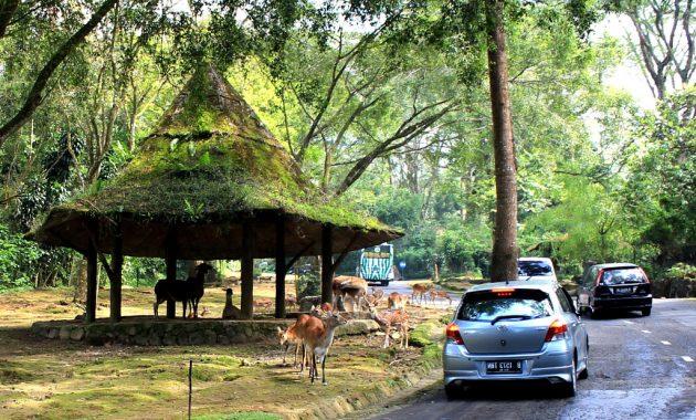 promo tiket masuk taman safari indonesia bogor