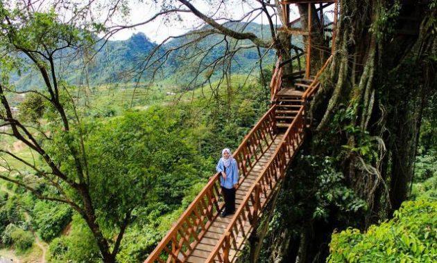 wisata penginapan rumah pohon di bogor