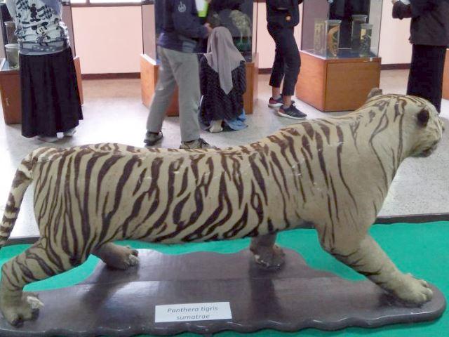 Melihat Pengawetan Hewan Yang Ada Di Museum Zoologi Bogor