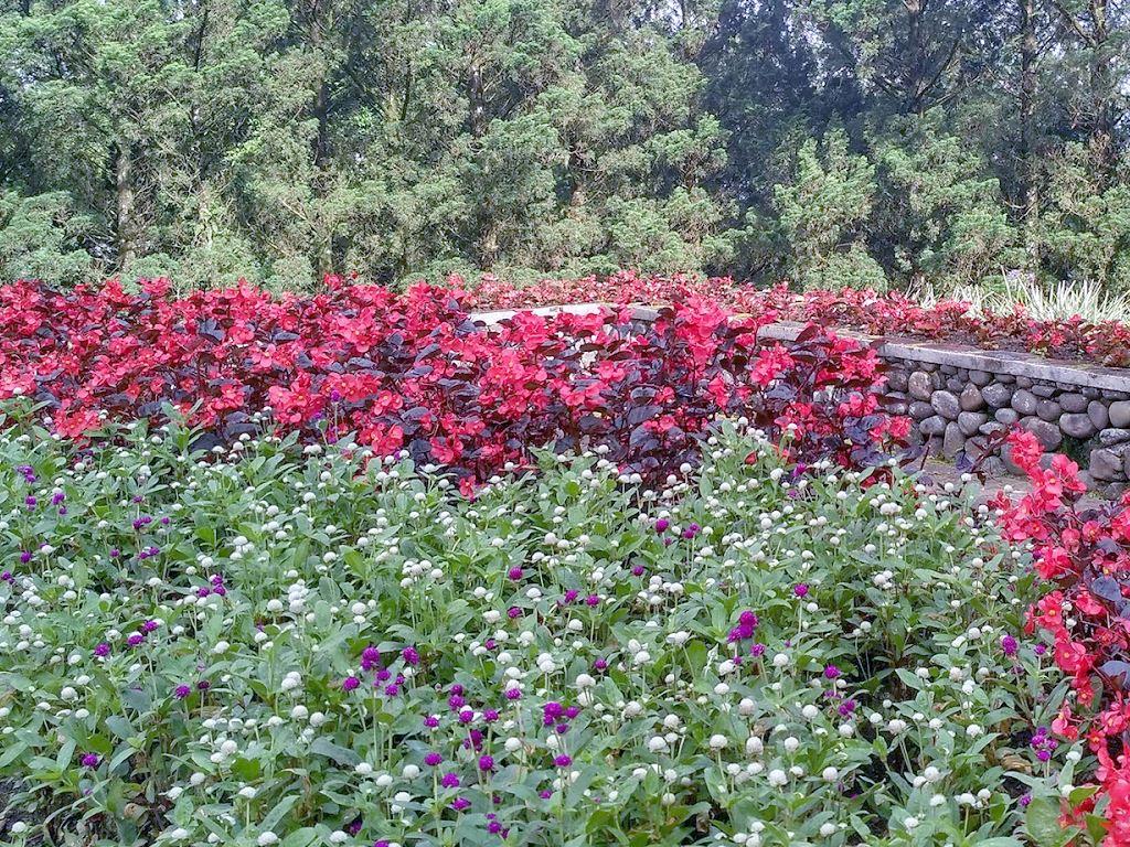 Wisata Kebun Bunga Ala Puncak Di Melrimba Garden Bogor