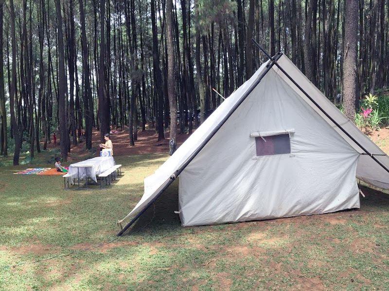 Hutan Pinus Tempat Wisata Gunung Pancar Sentul Bogor | Portal Seputar Cimanggu Bogor
